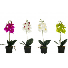 ORQUIDEA SMALL X5 LATEX 45CM C/MACETA