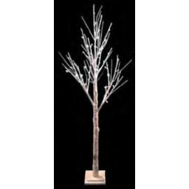 Brich Tree