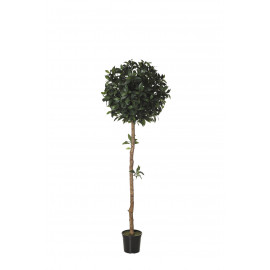 479205 FB ARBOL LAUREL 17R 150CM D:60CM C/M UV2