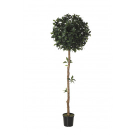 479213 FB ARBOL LAUREL 180CM D:60CM C/M UV2(306