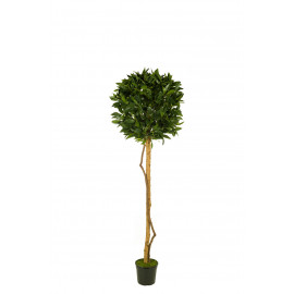 476235 FB ARBOL LAUREL 12R 150CM D:50CM C/M UV2