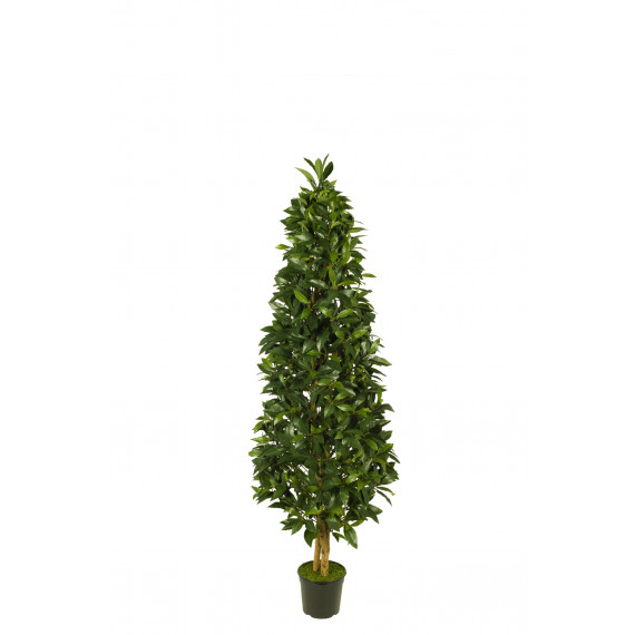 476243 FB PIRAMIDE LAUREL 120CM C/M UV2 (306862