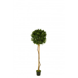476681 FB ARBOL TOPIARI LAUREL 120CM D:50CM