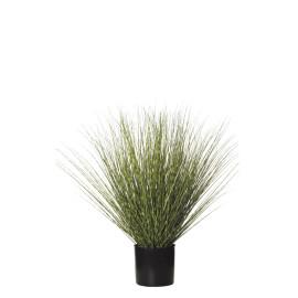 478463 PLANTA GRASS C/MAC 64CM BI