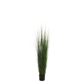 471368 PLANTA ONION GRASS 92CM