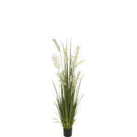471376 PLANTA BELLFLOWER GRASS 81CM