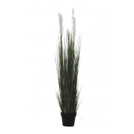 PLANTA GRASS PLUMERO X5/613H 135CM