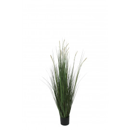470170 PLANTA GRASS & TAIL C/MACETA 90CM