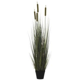 478314 PLANTA GRASS PUROS X5/396 150CM