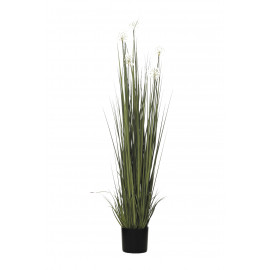 PLANTA GRASS DANDELION X9/240 170CM