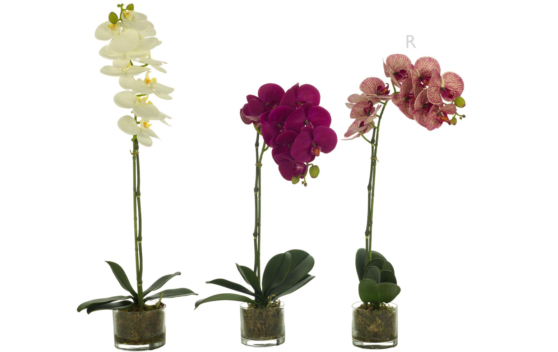 orquidea con hojas de latex www.floresymuchomas.com