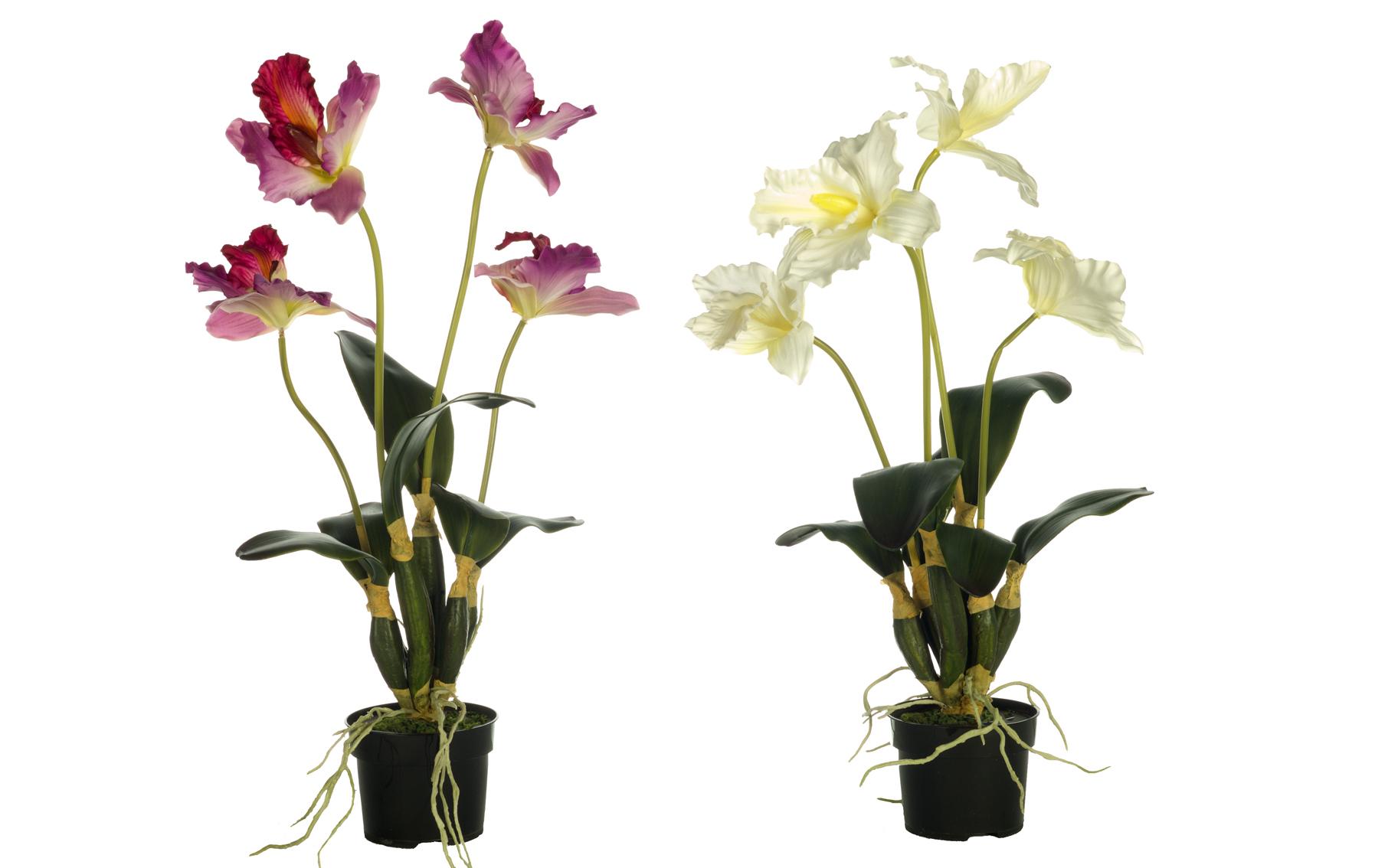 hibiscus www.floresymuchomas.com