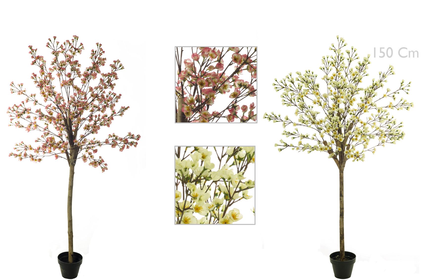 Almendro en Flor www.floresymuchomas.com