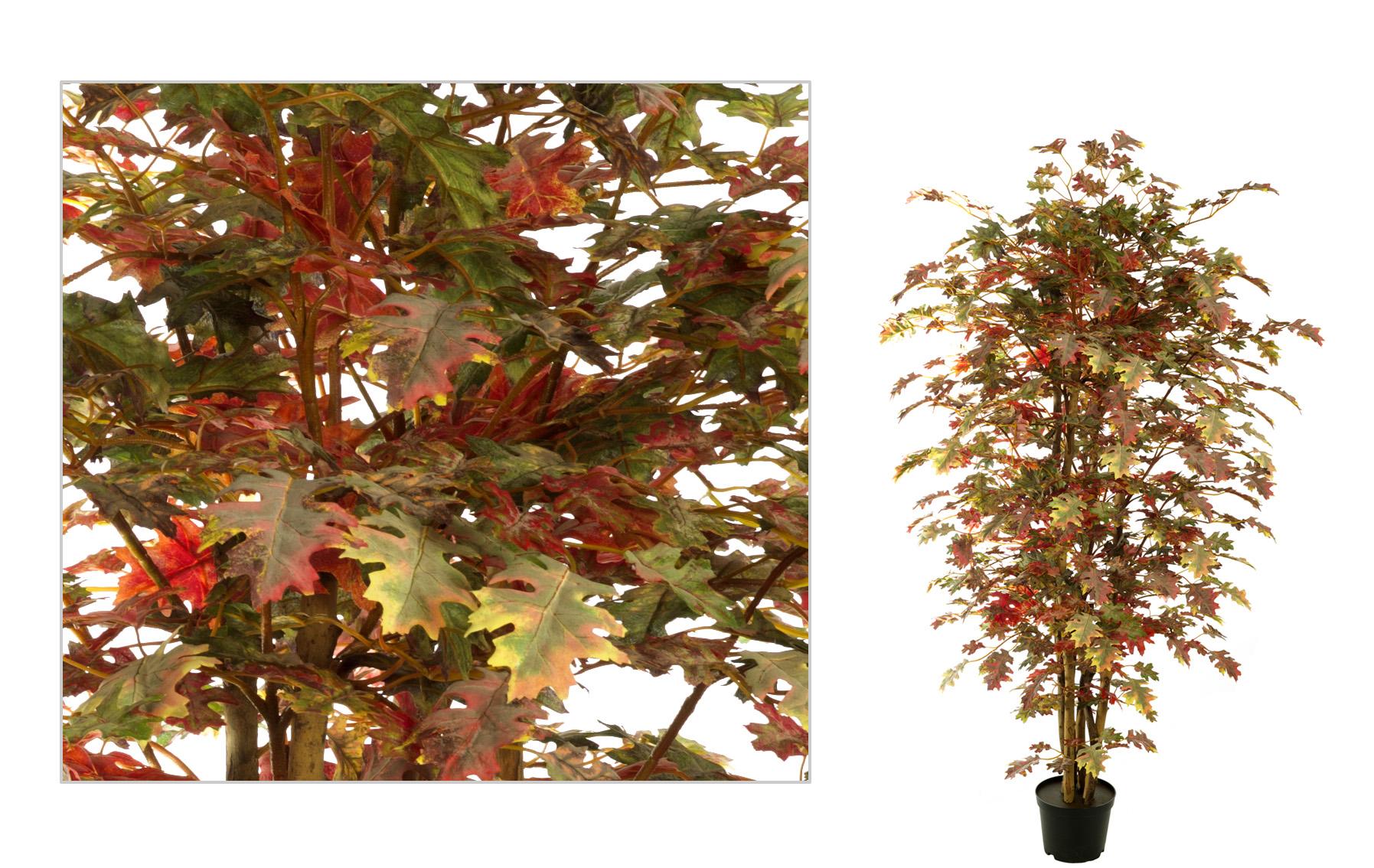 OAK ARBol www.floresymuchomas.com