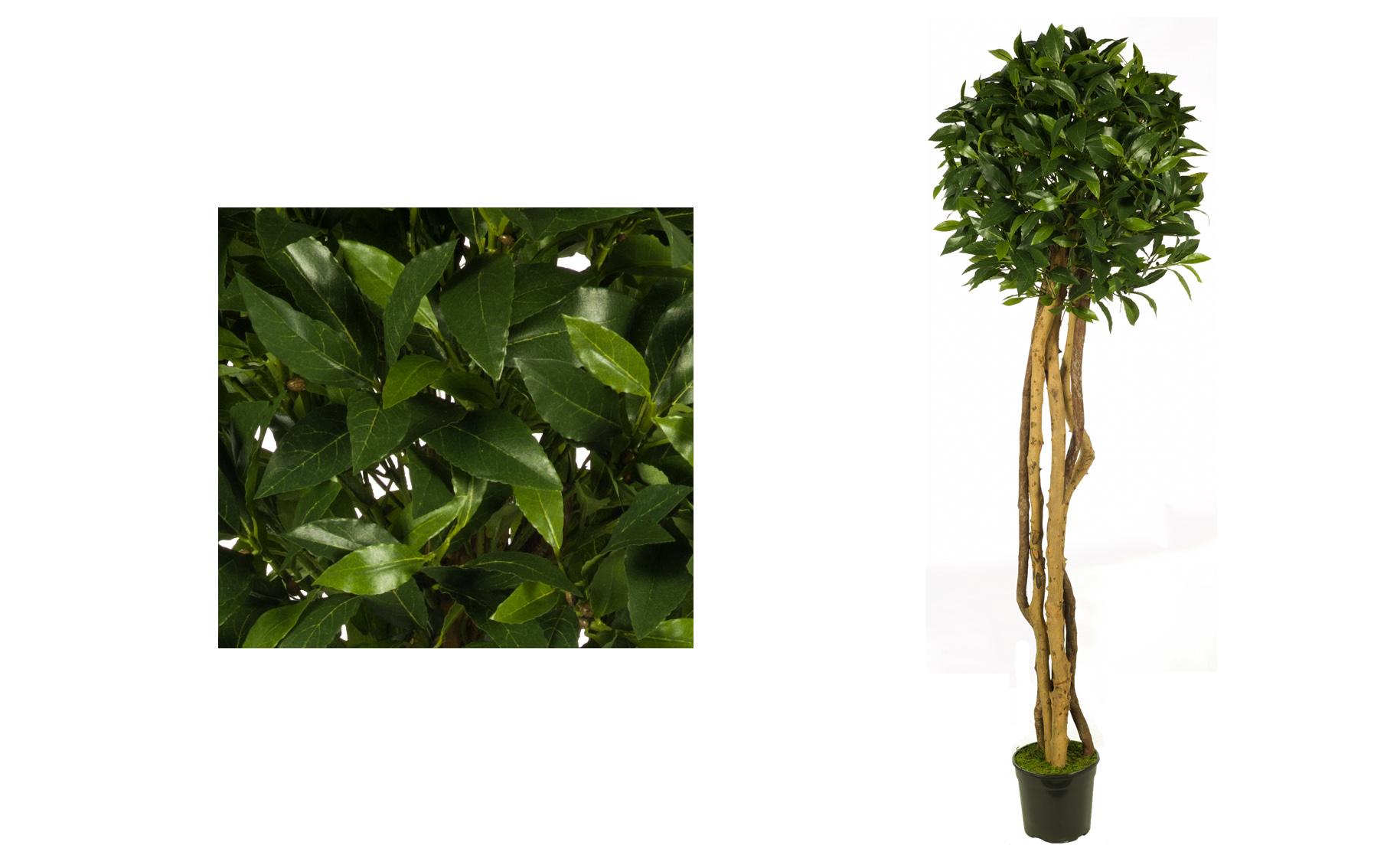 BOLA LAUREL www.floresymcuhomas.com