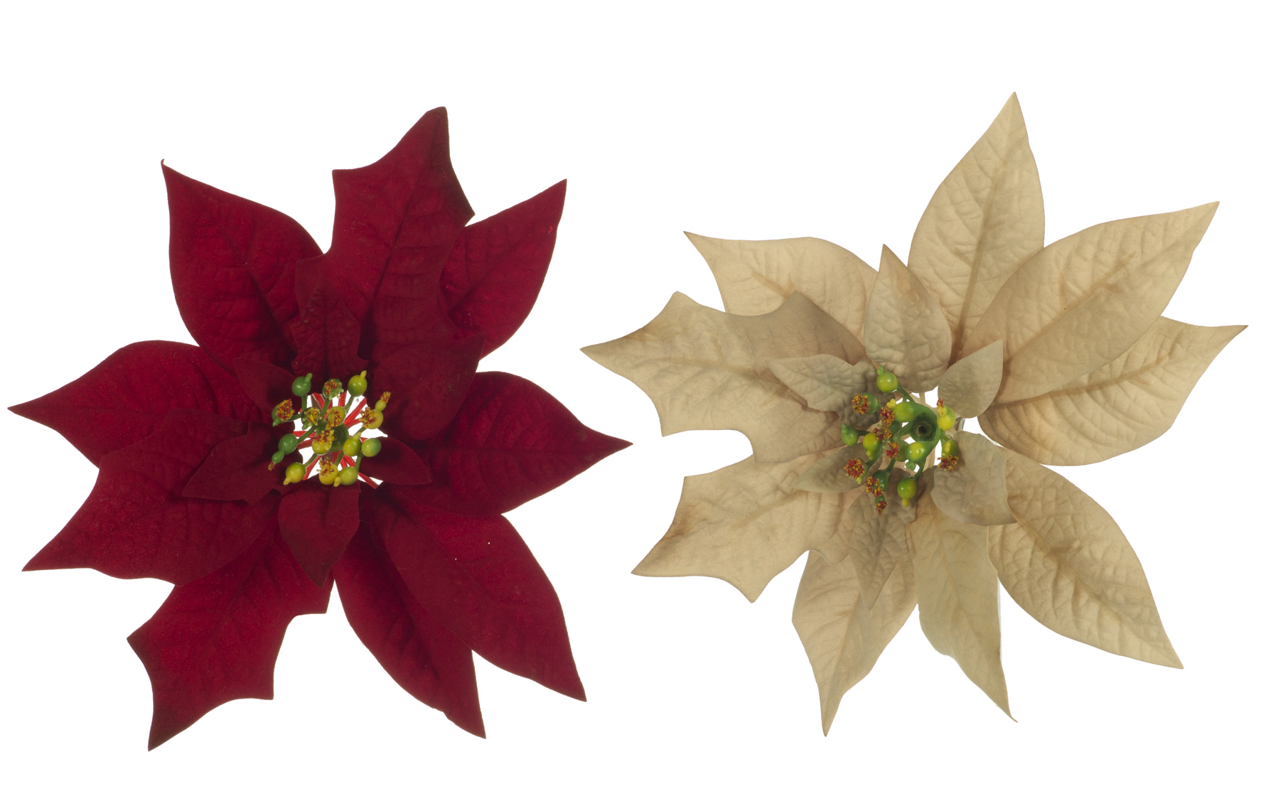 clip ponsetia navidad www.floresymuchomas.com