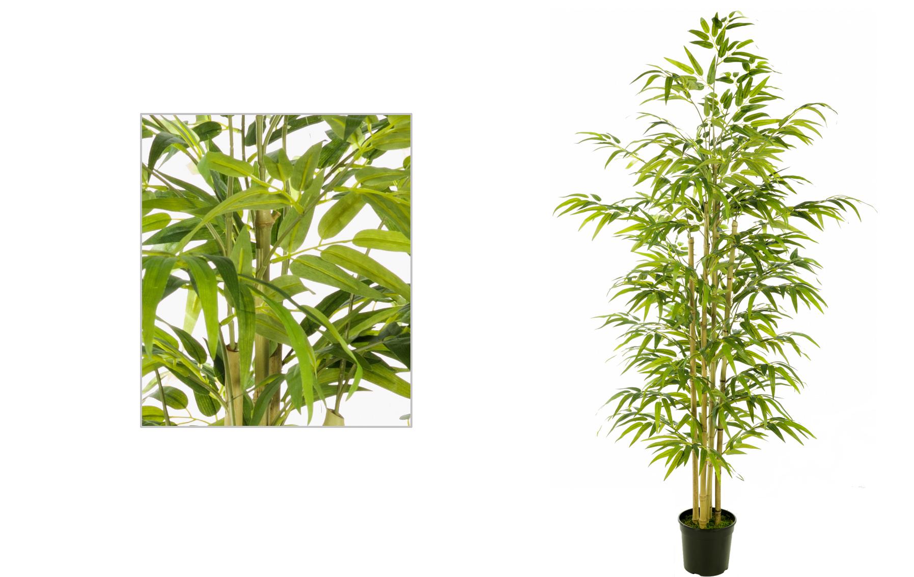 arbol bambu de 150cm www.floresymuchoms.com