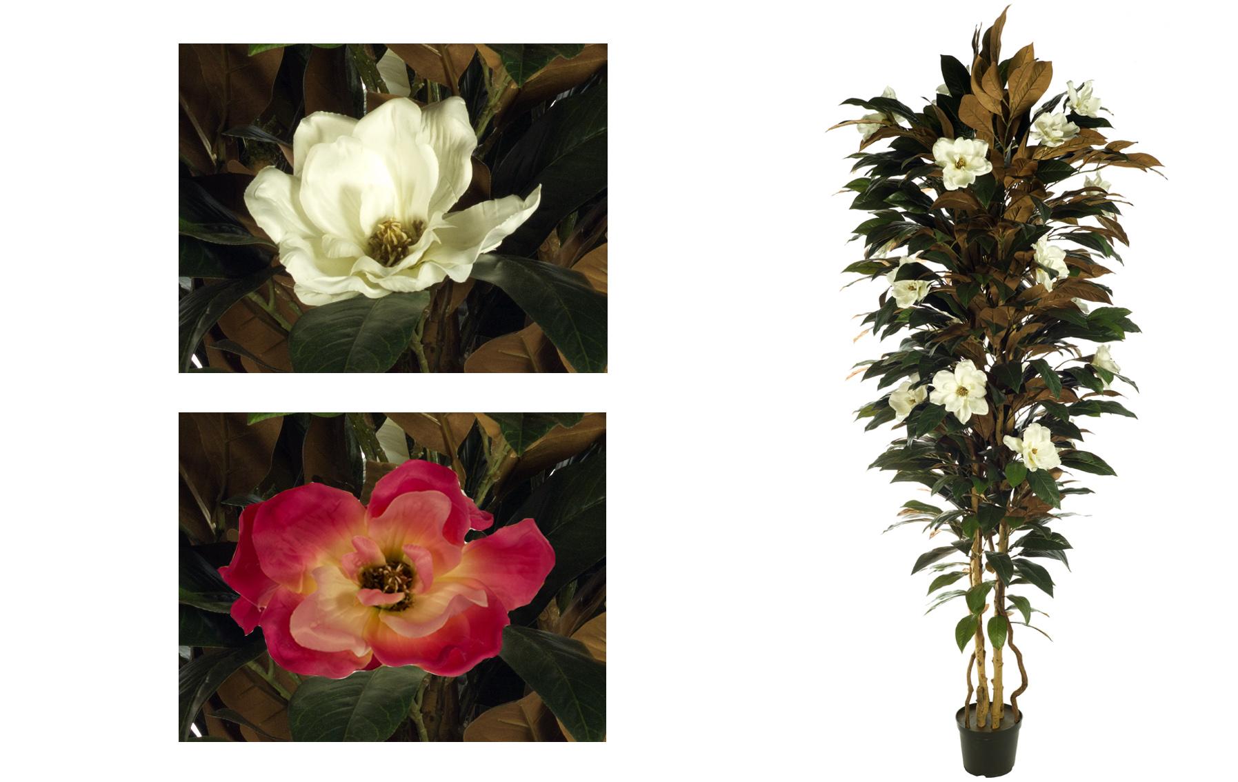 ARBOL MAGNOLIA www.florsymuchomas.com