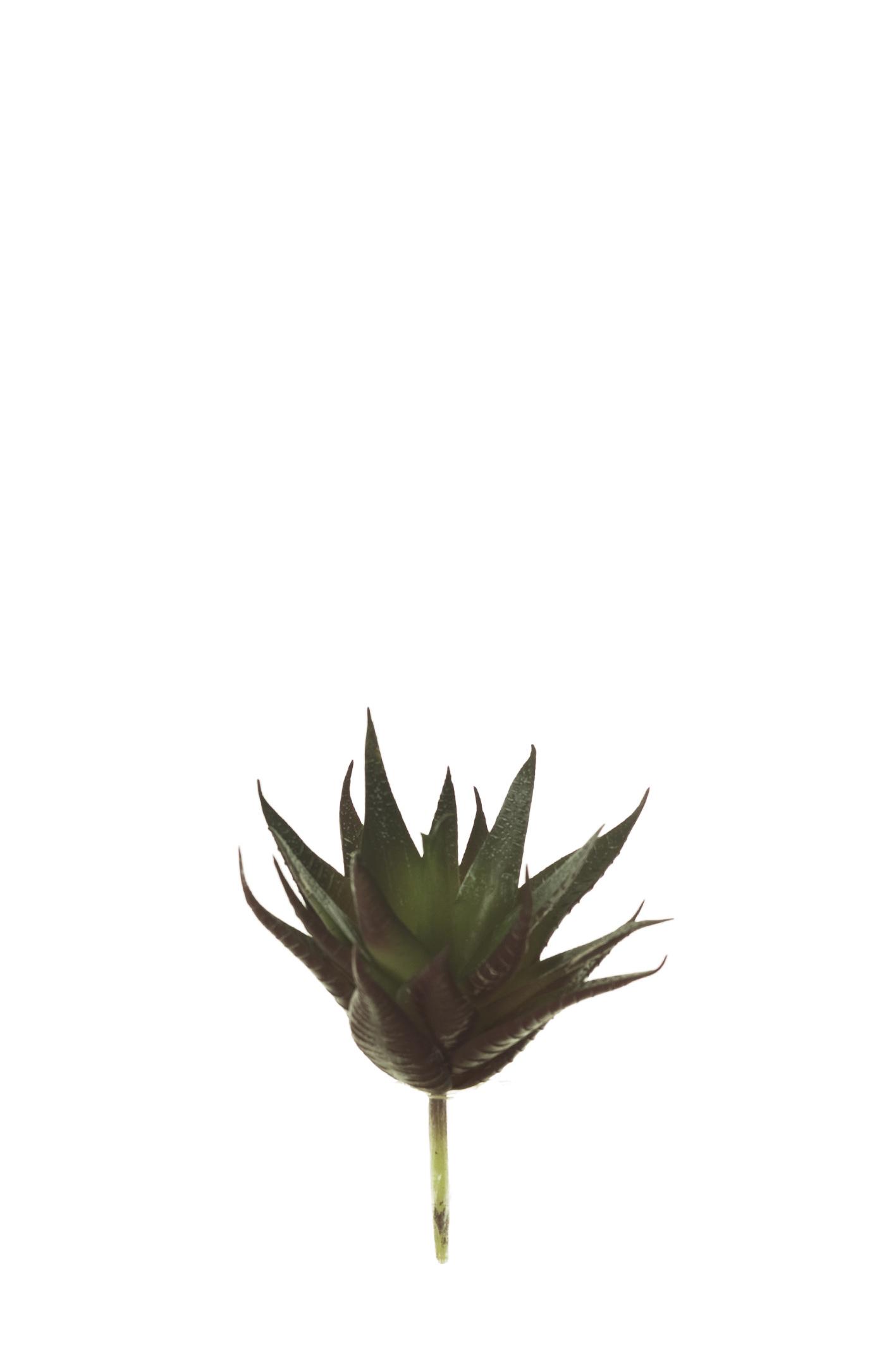GRASA FLORESYMUCHOMAS.COM