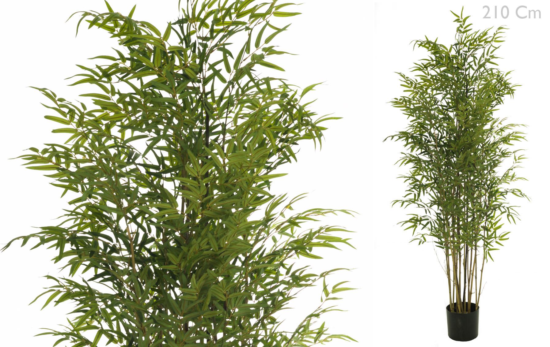 arbol bambu www.floresymuchomas.com